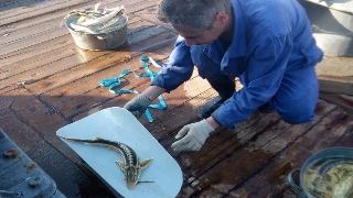 О рейсе по изучению молоди осетровых рыб