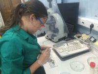 Работа лаборатории ихтиопатологии