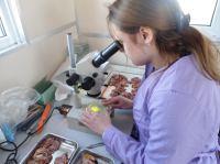Паразитологические исследования промысловых видов рыб