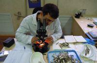 Информация о работе, проводимой Дагестанским филиалом ФГБНУ «КаспНИРХ»