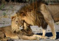 Туристические фотографии помогли биологам посчитать крупных хищников
