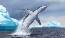 Мезозойские морские рептилии Сибири жили и в теплых, и в холодных водах